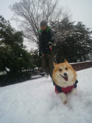 cona loves snow.JPG